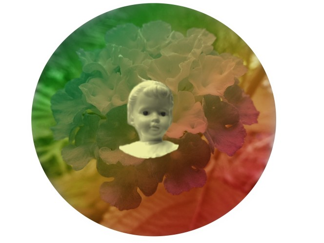 bloem rainbow pop