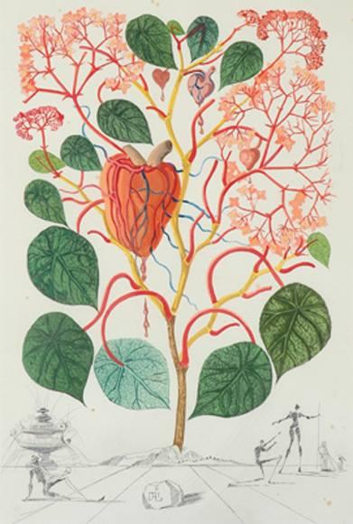 Begonia Salvador Dali